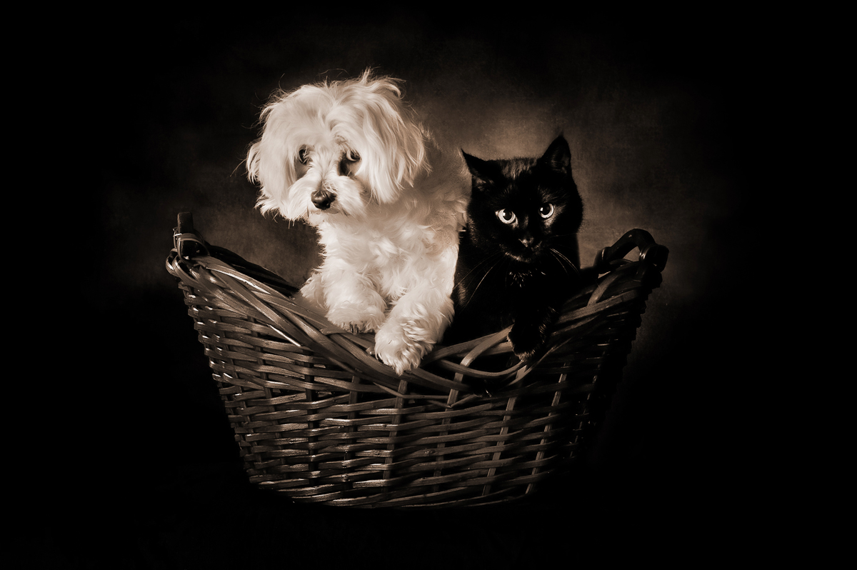 Milton Cat And Dog Home Website